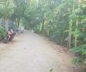 CẦN BÁN ĐẤT Ở TÂN THUẬN ĐÔNG, TP CAO LÃNH, ĐỒNG THÁP
