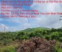Chính chủ cần bán gấp đất vị trí đẹp tại xã Tân Đức Huyện Hàm Tân, tỉnh Bình Thuận