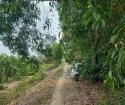 Bán 3330m2 (30x110)m đất trồng cây( có 537m2 thổ cư), cách DT816 2km, giá tốt cho đầu tư