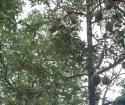 Chính chủ cần bán gấp lô đất vị trí đẹp tại Huyện Đăk Rlấp tỉnh Đắk Nông