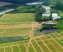 Đất sổ hồng gần Huyện Bến Cầu, Tây Ninh cần bán giá rẻ (92mx50m), LH0909484131