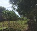 Cần bán gấp lô đất đẹp đối diện Khu Công Nghiệp Tâm Thắng huyện Cư Jút, tỉnh Đắk Nông