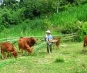 Bán đất đang làm trang trại chăn nuôi gần mặt tiền 786 huyện bến cầu Tây Ninh, giá rẻ. LH0909484131