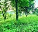 Siêu Phẩm nghỉ dưỡng cho các nhà đầu tư hơn 3600m có thổ cư tại Lương Sơn , Hòa Bình