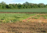 Đất chưa có sổ đỏ có được chuyển nhượng