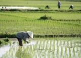 Hướng dẫn kê khai, tính và nộp thuế sử dụng đất nông nghiệp